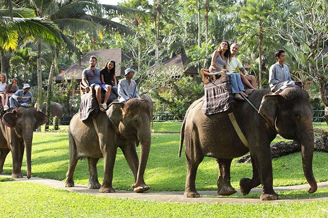 elephant_ride001